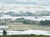 熊本県植木町の畑の風景